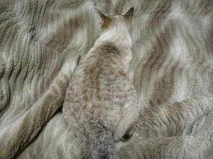 Well-Camouflaged Cats (35 photos) 14