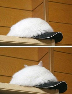 Well-Camouflaged Cats (35 photos) 15