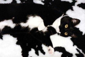 Well-Camouflaged Cats (35 photos) 18