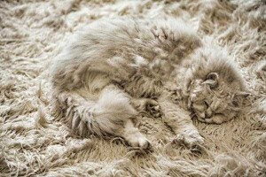 Well-Camouflaged Cats (35 photos) 19
