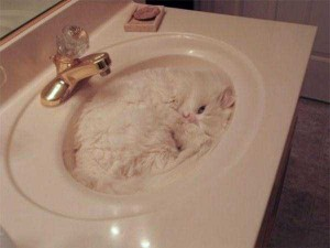 Well-Camouflaged Cats (35 photos) 21
