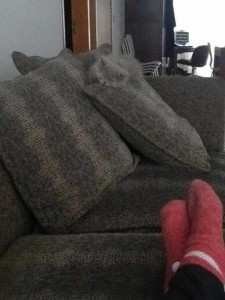 Well-Camouflaged Cats (35 photos) 23