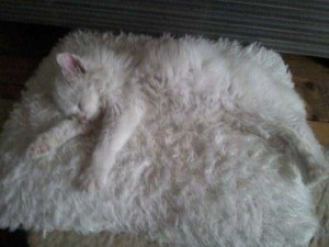 Well-Camouflaged Cats (35 photos) 24