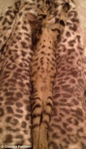 Well-Camouflaged Cats (35 photos) 8