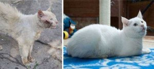 Cats That Were Once Homeless And Abandoned (28 photos) 12