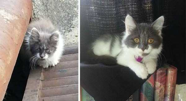 Cats That Were Once Homeless And Abandoned (28 photos) 13