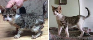 Cats That Were Once Homeless And Abandoned (28 photos) 15