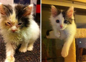 Cats That Were Once Homeless And Abandoned (28 photos) 16