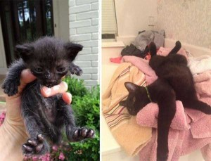 Cats That Were Once Homeless And Abandoned (28 photos) 17