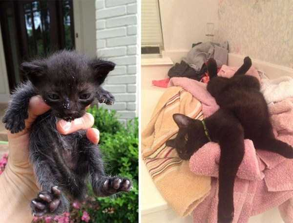 cats-before-and-after-the-rescue (17)
