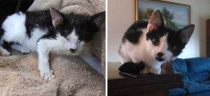 Cats That Were Once Homeless And Abandoned (28 photos) 18