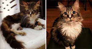 Cats That Were Once Homeless And Abandoned (28 photos) 20