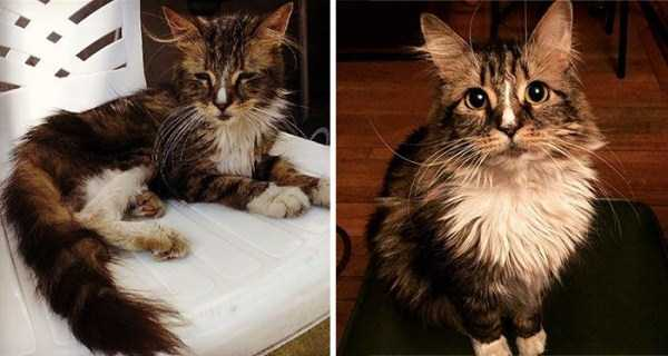 cats-before-and-after-the-rescue (20)