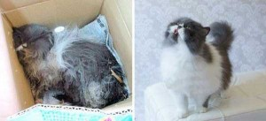 Cats That Were Once Homeless And Abandoned (28 photos) 21