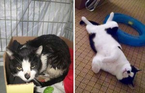 Cats That Were Once Homeless And Abandoned (28 photos) 22