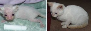 Cats That Were Once Homeless And Abandoned (28 photos) 23