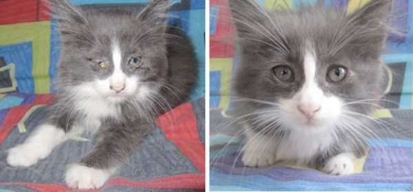 cats-before-and-after-the-rescue (24)
