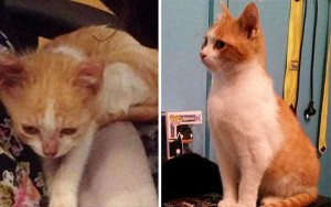 Cats That Were Once Homeless And Abandoned (28 photos) 25