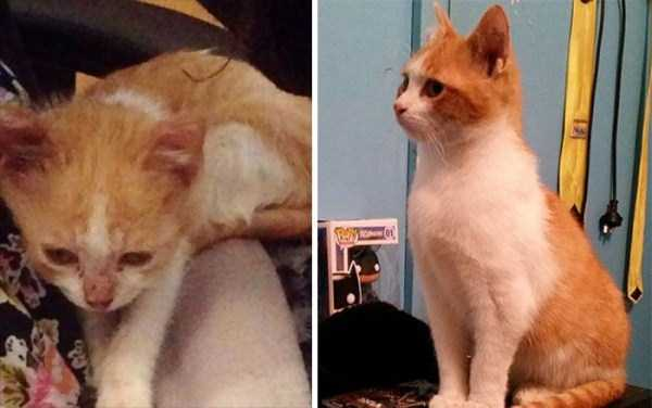cats-before-and-after-the-rescue (25)