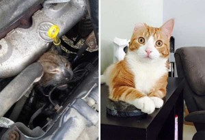 Cats That Were Once Homeless And Abandoned (28 photos) 26