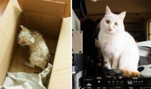 Cats That Were Once Homeless And Abandoned (28 photos) 27