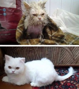 Cats That Were Once Homeless And Abandoned (28 photos) 28