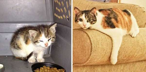 cats-before-and-after-the-rescue (3)