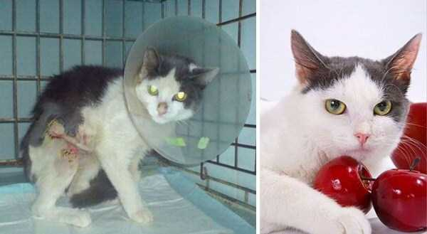 cats-before-and-after-the-rescue (4)