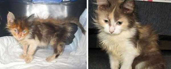 cats-before-and-after-the-rescue (5)