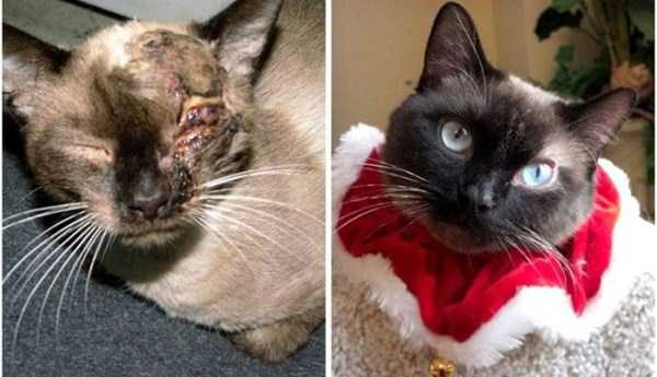 cats-before-and-after-the-rescue (6)