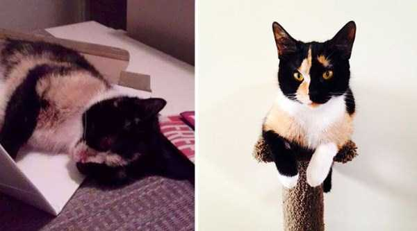 cats-before-and-after-the-rescue (7)