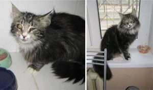 Cats That Were Once Homeless And Abandoned (28 photos) 8