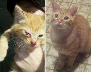 Cats That Were Once Homeless And Abandoned (28 photos) 9