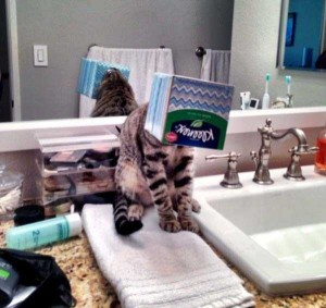 Cats Being a Little Too Curious (33 photos) 10