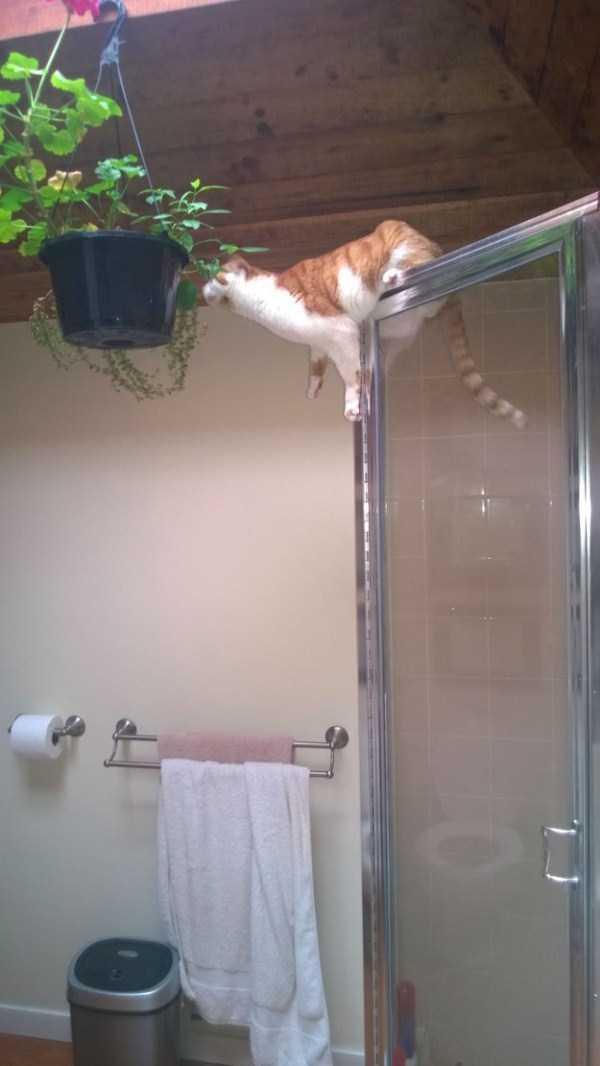 curious-cats (13)