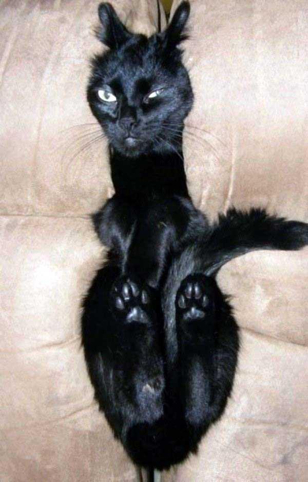 curious-cats (16)