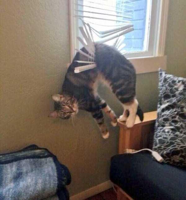 curious-cats (17)