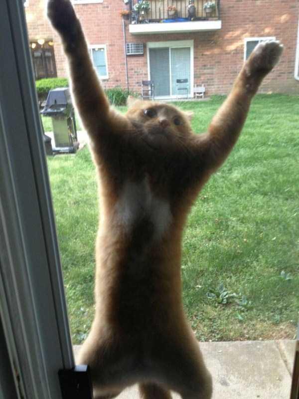 curious-cats (19)