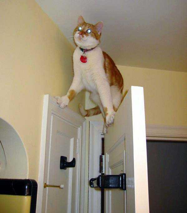 curious-cats (2)