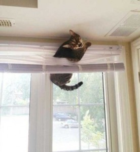 Cats Being a Little Too Curious (33 photos) 21