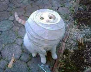 Cats Being a Little Too Curious (33 photos) 22