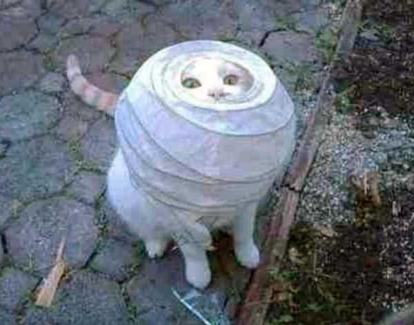 curious-cats (22)