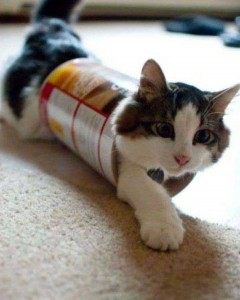 Cats Being a Little Too Curious (33 photos) 24