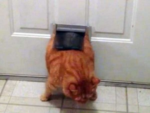 Cats Being a Little Too Curious (33 photos) 25