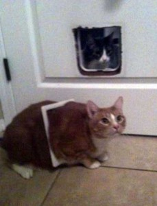 Cats Being a Little Too Curious (33 photos) 3