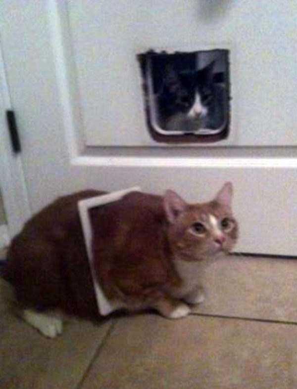 curious-cats (3)