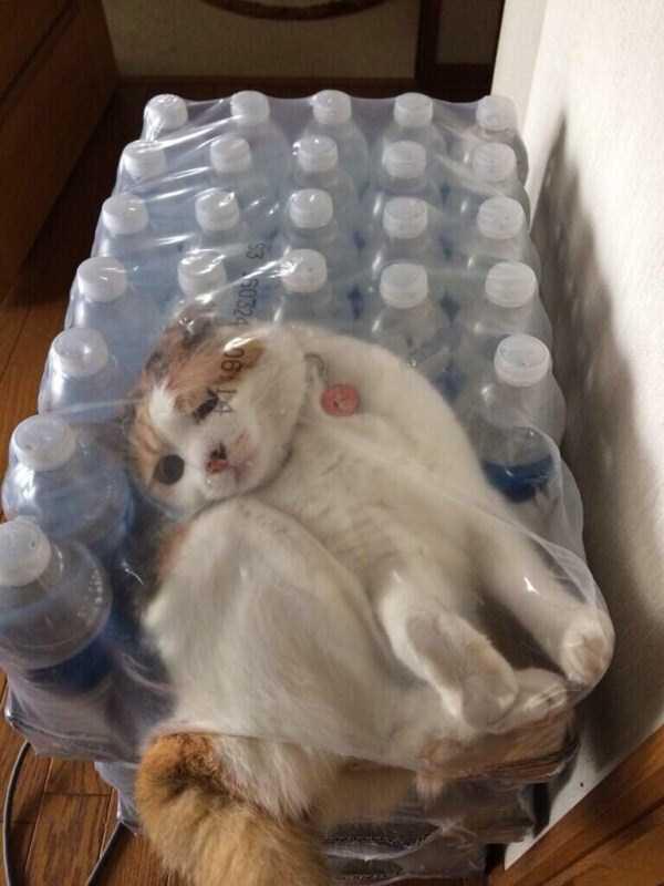 curious-cats (32)