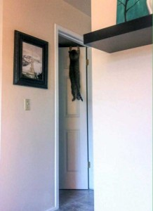 Cats Being a Little Too Curious (33 photos) 4
