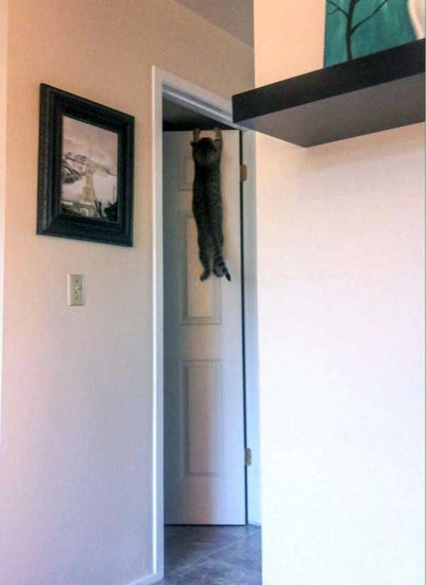 curious-cats (4)