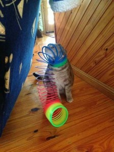 Cats Being a Little Too Curious (33 photos) 6